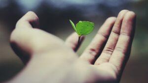 Persoonlijke groei tips die echt werken, groei is als een jong plantje